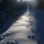 Arpelin - Ski - Contre jour