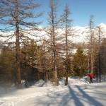 Ski - Col de la Lauze - vers la sortie de la forêt