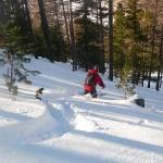 Ski - Col de la Lauze - Derniers bons virages entre les souches