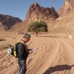 Wadi Rum - L'arbre de la vallée