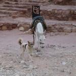 Petra - Pas facile la vie de mule là bas!