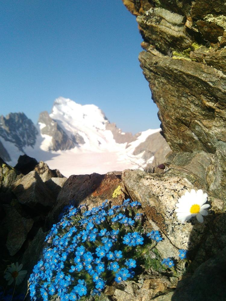 Pic du Glacier Blanc - Arête S - Erytriche nain
