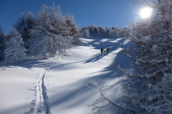 Une belle trace en ski de randonnée dans une forêt plâtrée de neige