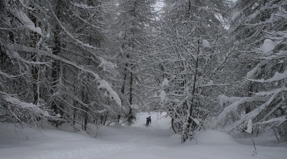 Hors-piste Puy-St-Vincent - Faufilage dans les mélèzes