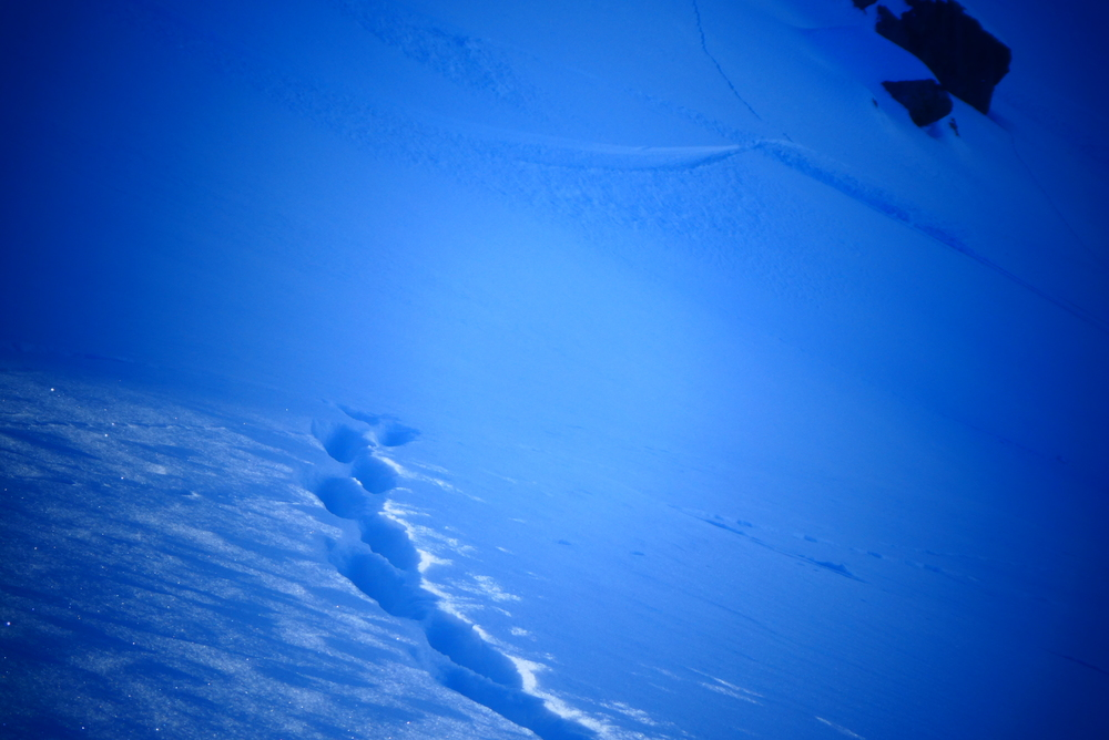 Couloir nord Aiguillas - Renard vs skieur