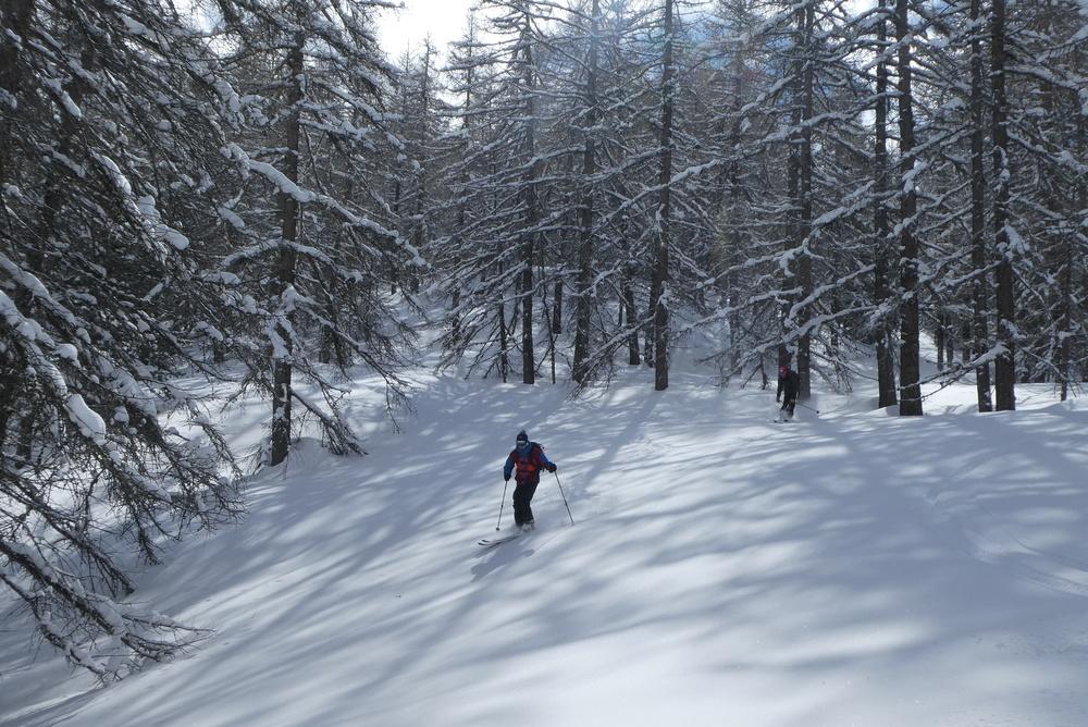 Free-rando-Crévoux - Encore des forêts