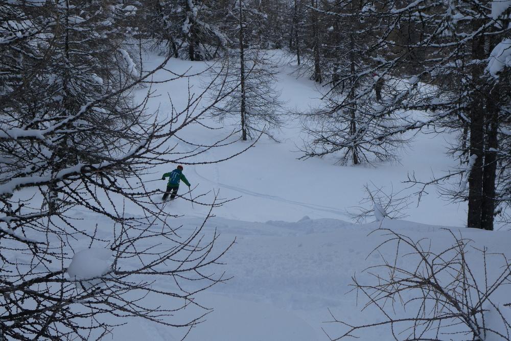 Free-rando-Crévoux - Skieuse dans la forêt