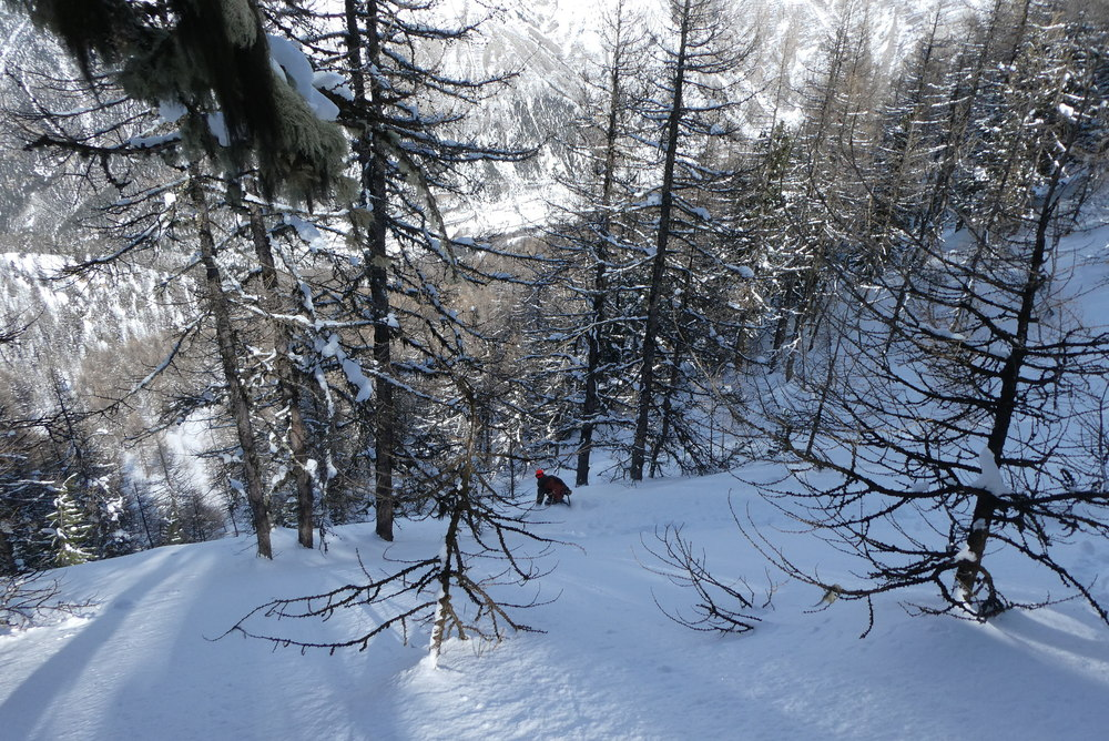 Free-rando-Crévoux - Popow forêt