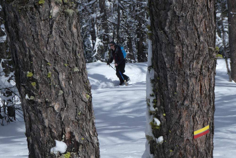 Week-end ski rando - Fouillouse - Entre les arbres