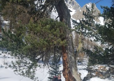 Ski rando Ceillac - Pas du Curé - Au pied de mon arbre
