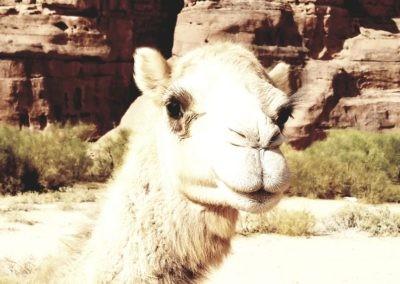 Wadi Rum - Voie Bédouine - Un ptit sourire?