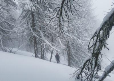 Ski randonnée Freissinières - promenons nous dans les bois